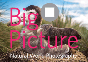 PHOTO COMPETITION - BigPicture Natural World Photography Competition 2019