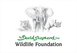DSWF Global Canvas Art Competition 2018