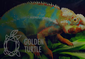 DESIGN CONTEST - Golden Turtle 2018 - Competition of design projects of nature
