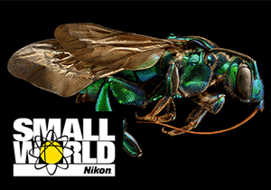 PHOTOMICROGRAPHY COMPETITION - Nikon Small World 2019