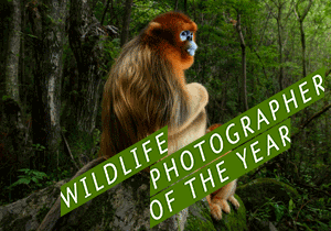 PHOTOGRAPHY COMPETITION - Wildlife Photographer Of The Year 2019