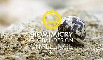 Biomimicry Global Design Challenge 2021