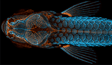 Nikon Small World 2021 Photomicrography and Video Competition